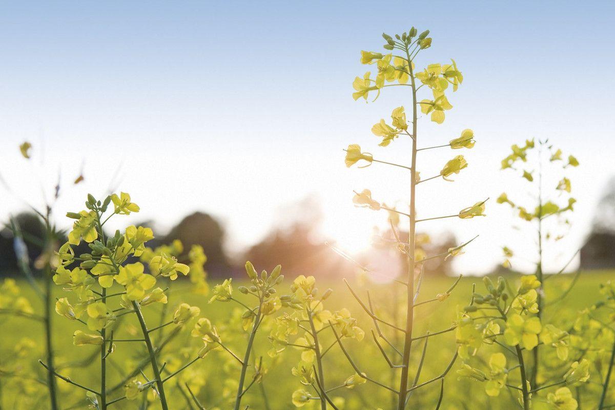 Vor- und Nachteile von Biogas – alles, was Du wissen musst