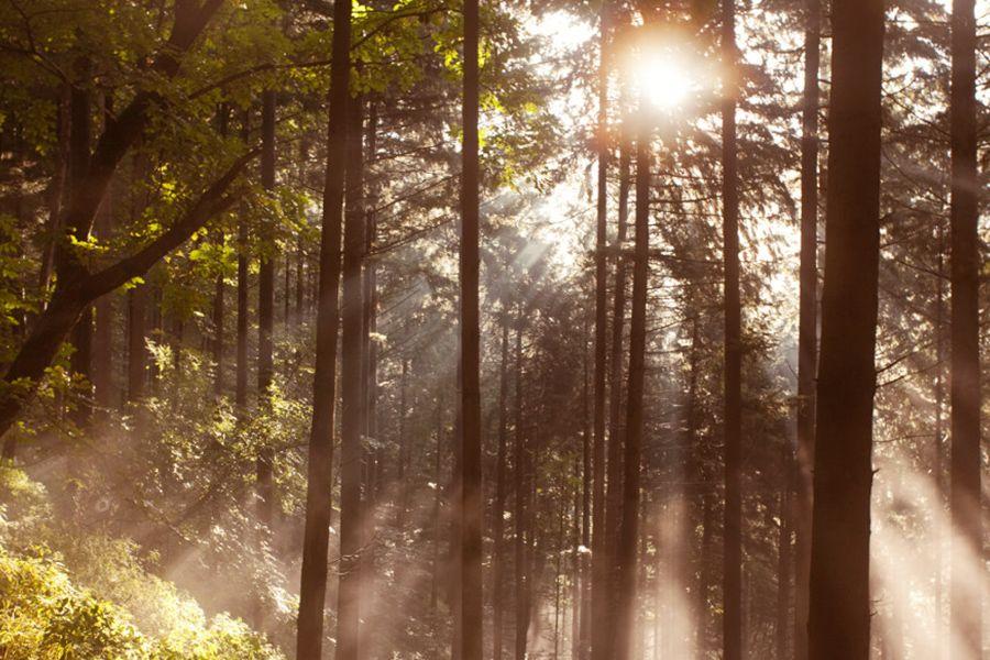 Jeder Baum zählt – Aufforstung zum Schutz des Klimas