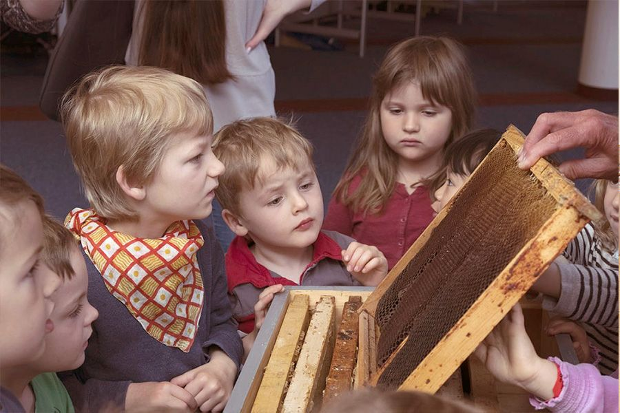 Bienenunterrichtsstunden für Schüler