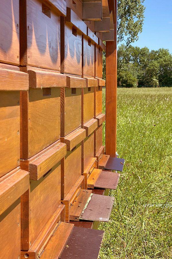 Bienenvölker Betriebsgelände badenova Offenburg