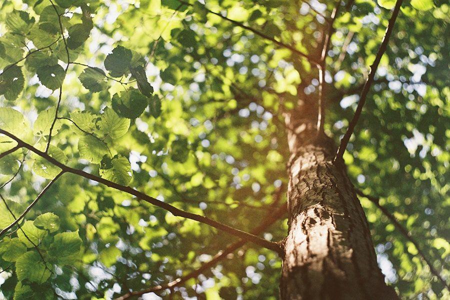 Warum Bäume für uns lebenswichtig sind