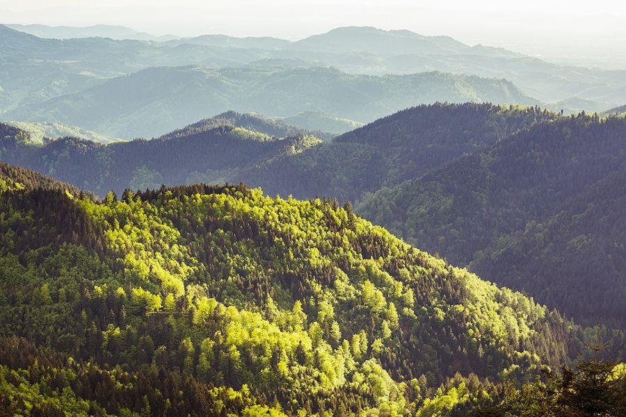 Der badenova Innovationsfonds für Klima- und Wasserschutz