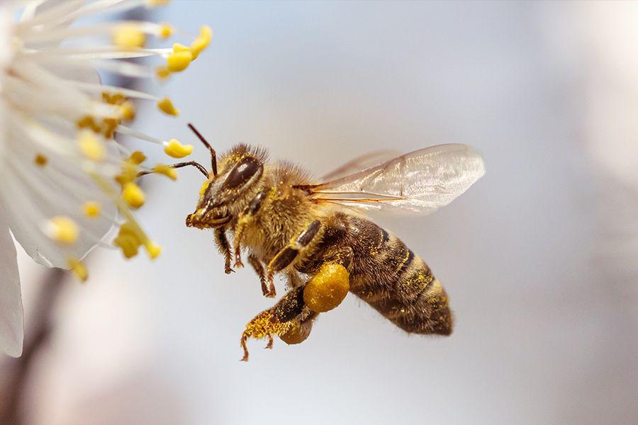 Weltbienentag – ein großer Tag für ein kleines Tier