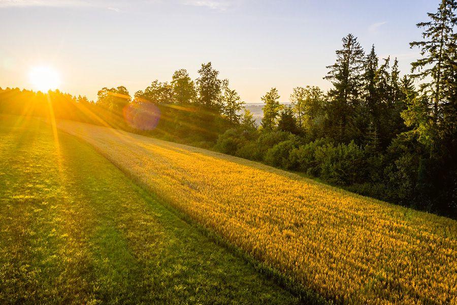 Nachhaltige Kuhmilch-Alternative: Bio-Haferdrink aus dem Schwarzwald