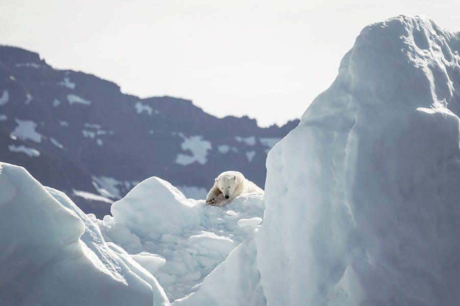 Eisbär liegt auf einem Eisberg in der Sonne