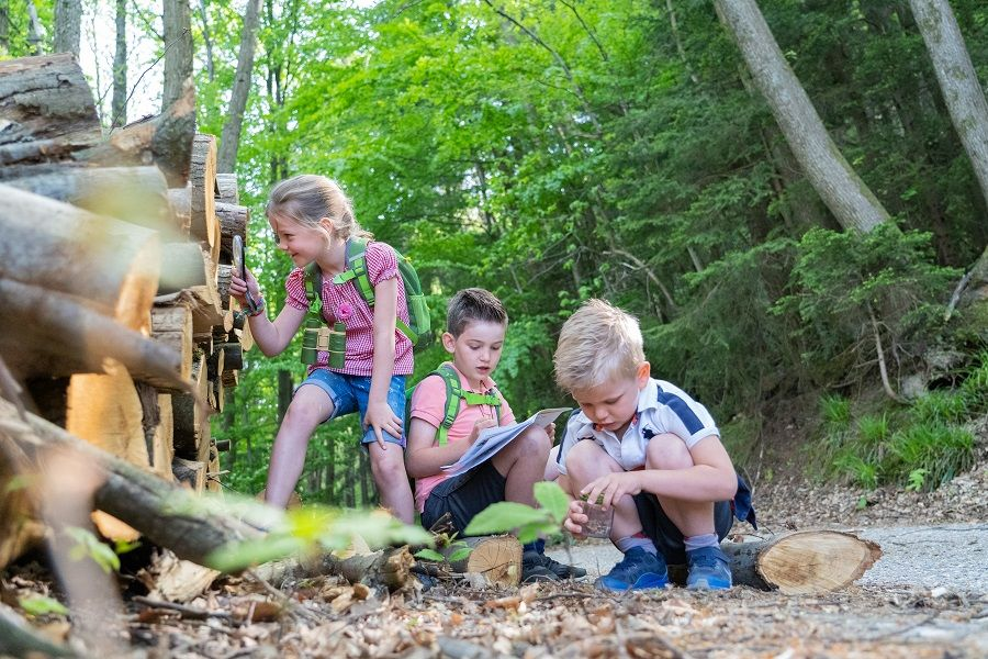 Kinder beim Entdecken der Natur in einem Waldstück.
