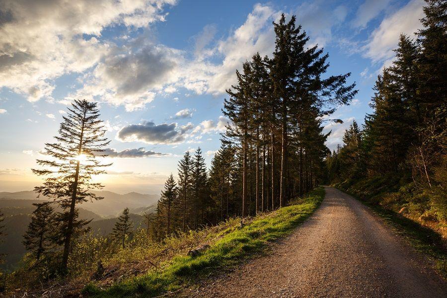 Schwarzwald entdecken – Heimat erleben!