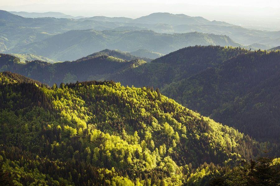 Landschaft des Naturparks Schwarzwald.