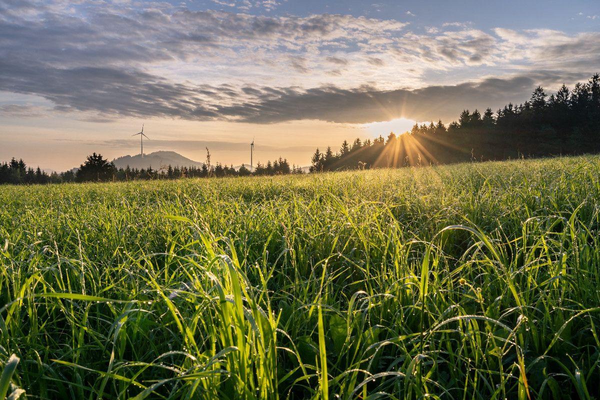 Windräder im Schwarzwald beim Sonnenuntergang