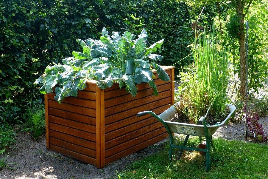 Bepflanztes Hochbeet mit Kohl